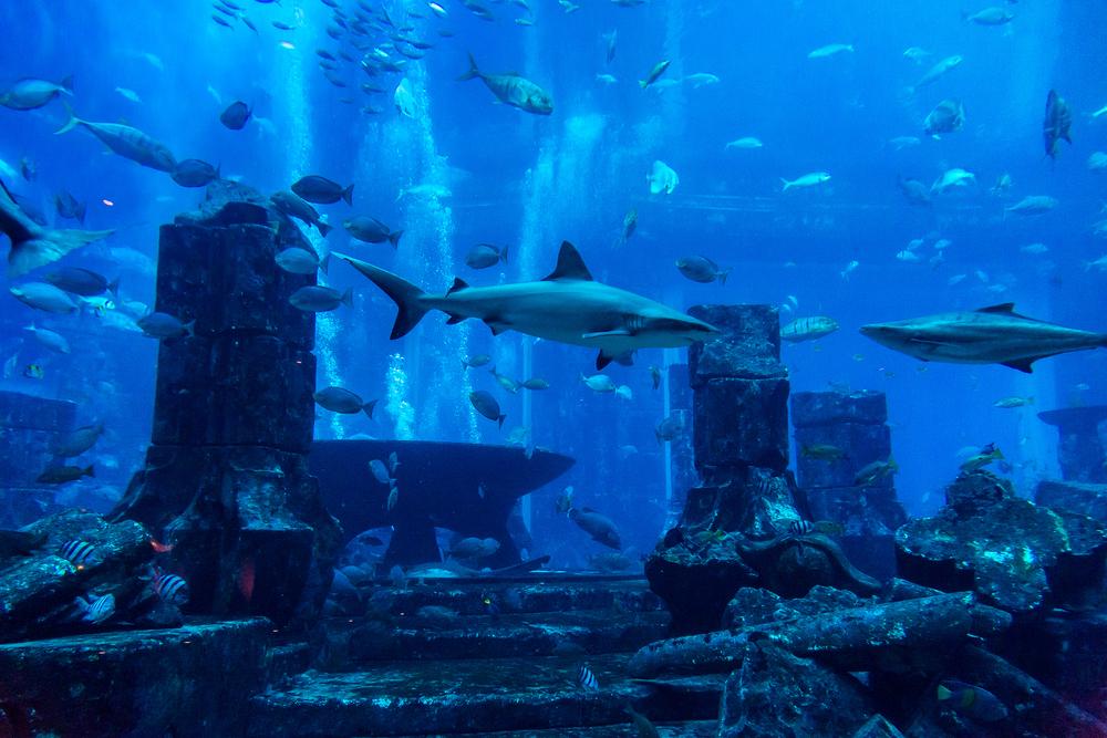 מלון אטלנטיס דובאי- מלון מתחת למים